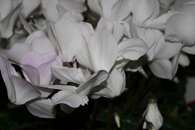 201001030001.jpg